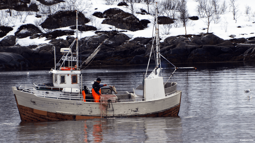Skreifisker i Austnesfjorden - Sildpollnes - Svolvær - Lofoten