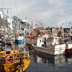 Svolvær havn - Lofoten - Fiskebåter - Skreifiske