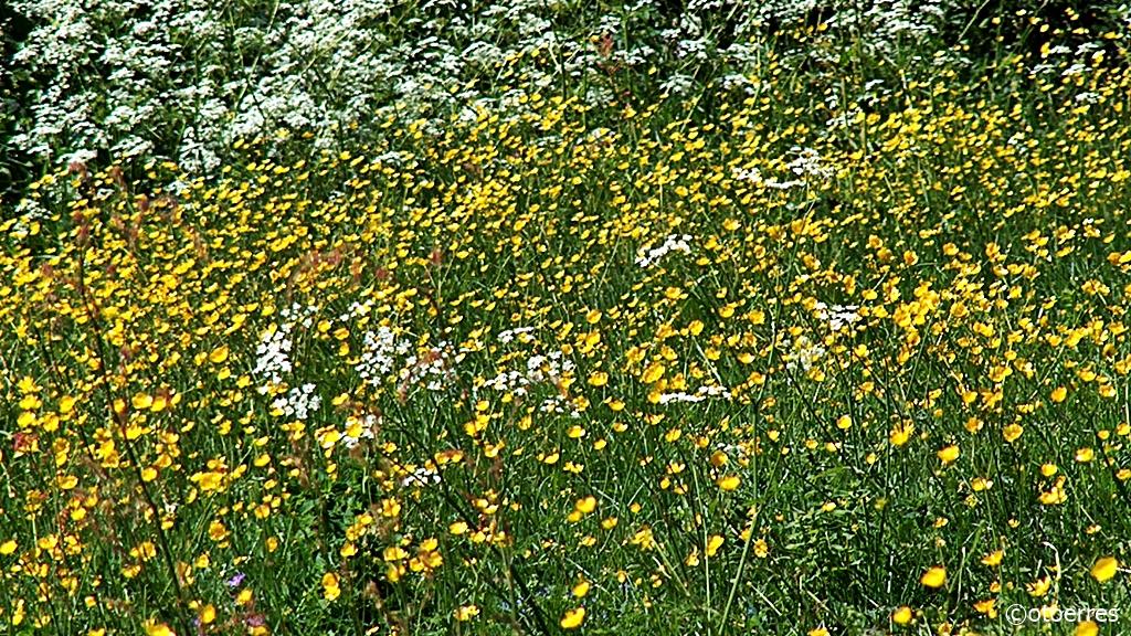 Blomstereng - Stenebynes - Iväg - Dalsland - Sverige