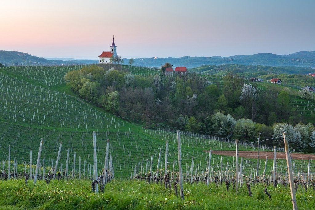 Slovenien - Bela Krajina - vingård