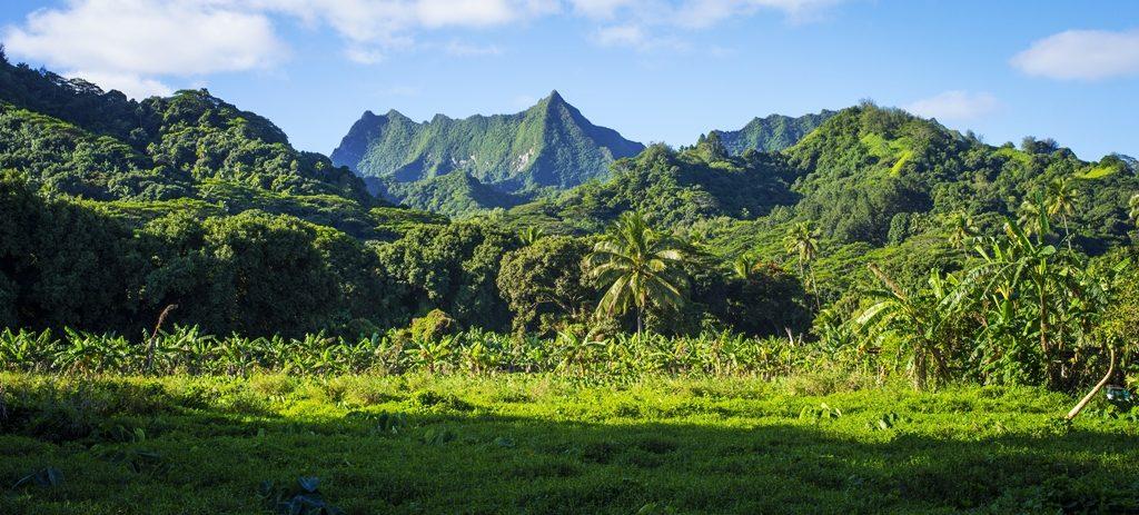 Cook Island - Sydhavsøyer - Stillehavet - Landskap