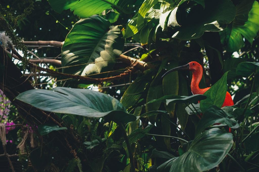 Flamingo - Akvariet i Genoa - Italia