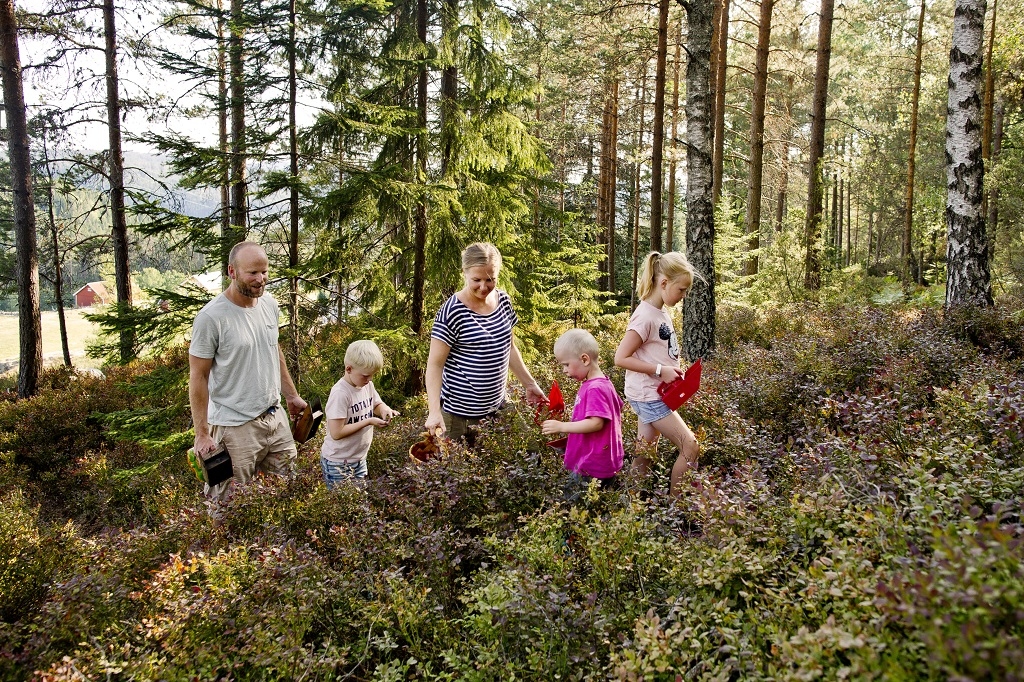 Røyland gård - Bærplukking - lokalmat - Saft - Syltetøy - Familien Sagstuen