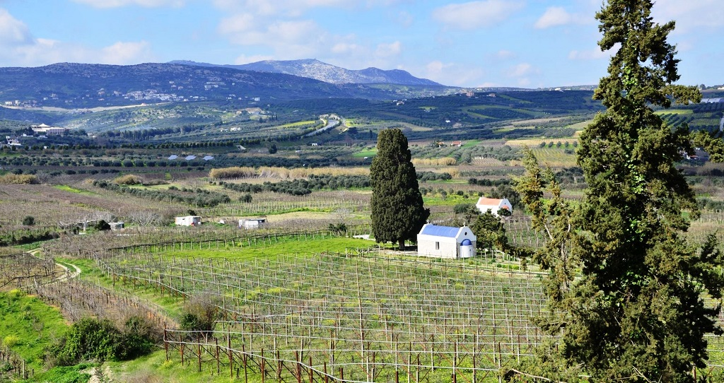 Vingård - Kreta - Hellas - TUI