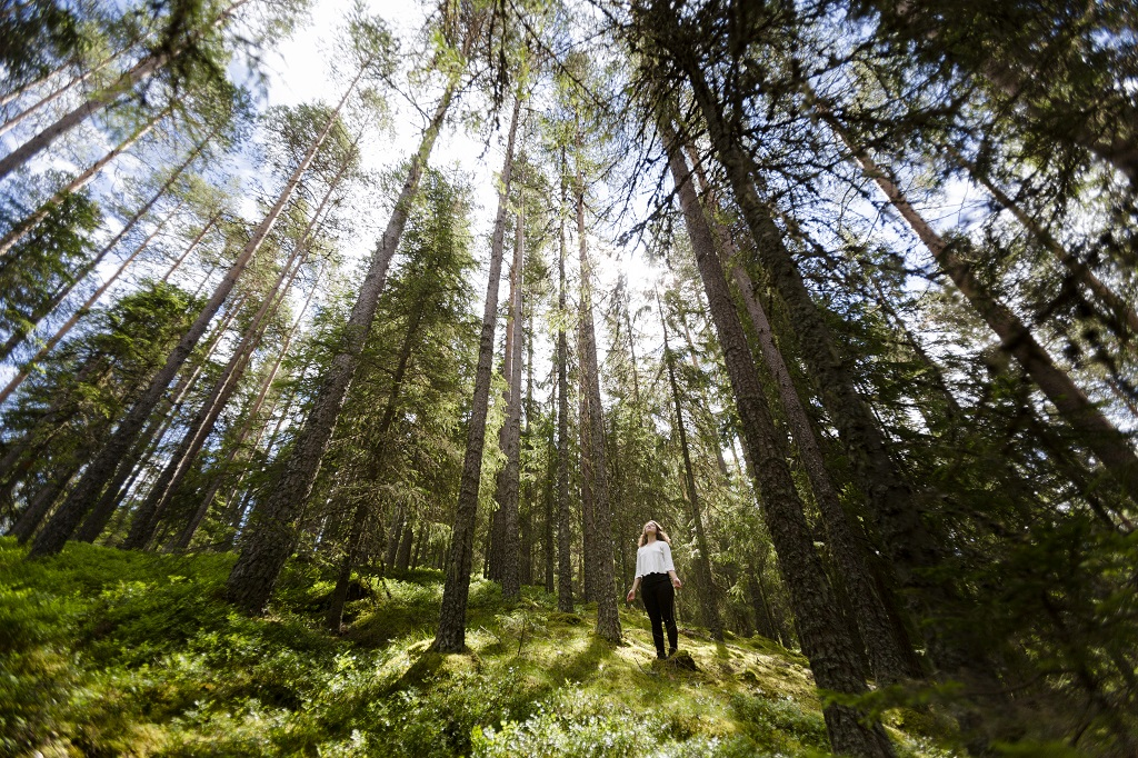 Sverige -Dalarna - skog - Fotograf Matilda Holmqvist