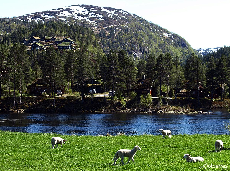 Saganeset - Solheimsdalen - Tjørhom - Sirdal - Agder
