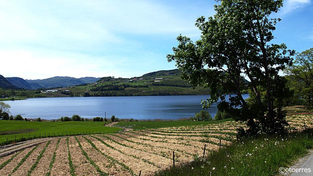 Jordbæråker - Fister - Hjelmeland - Ryfylke - Rogaland