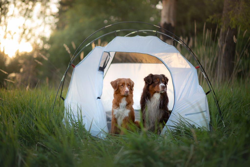 Hunder - Dyrebar.no - Dyrebeskyttelsen