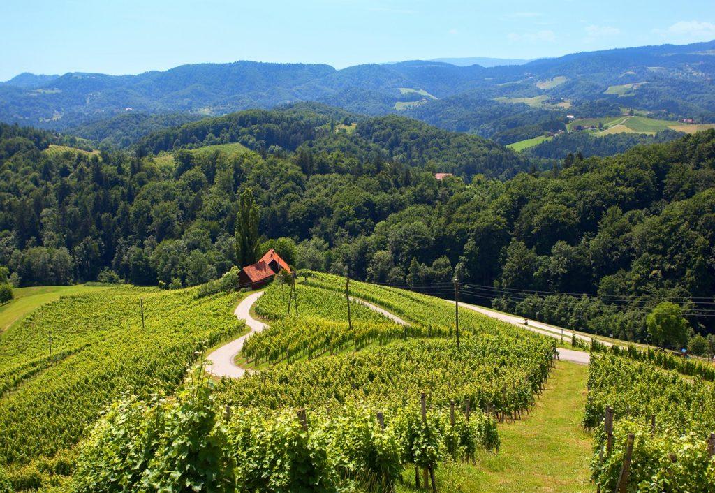 Slovenia - Spicnik Heart - den slovenske vinveien