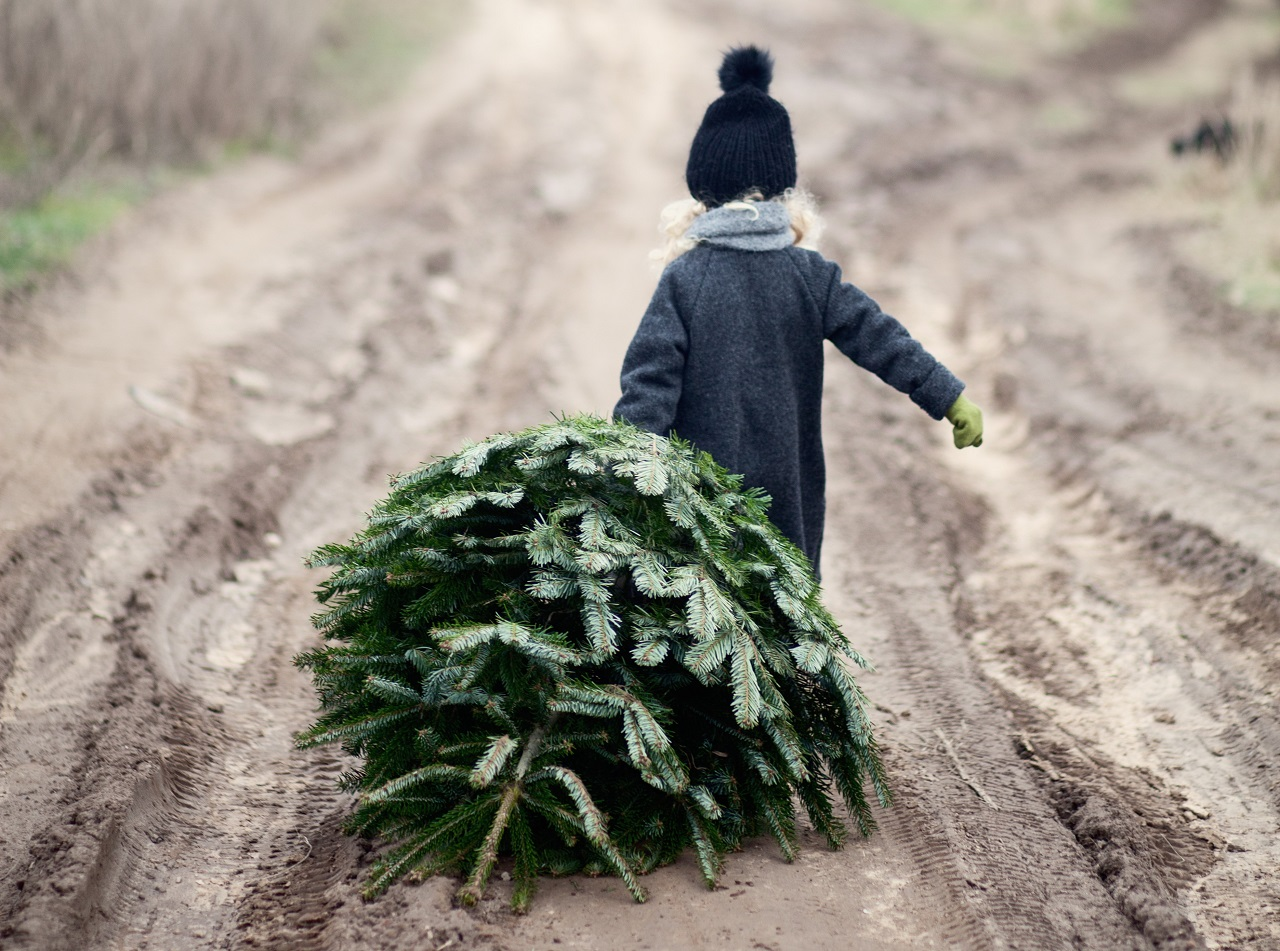 Ensomt Juletre søker gaver - Kampanje - Nordic Choice Hotels -