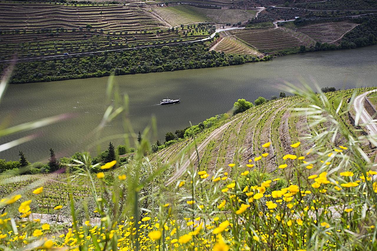 Dourodalen - Elv - Nord-Portugal - Vinmarker