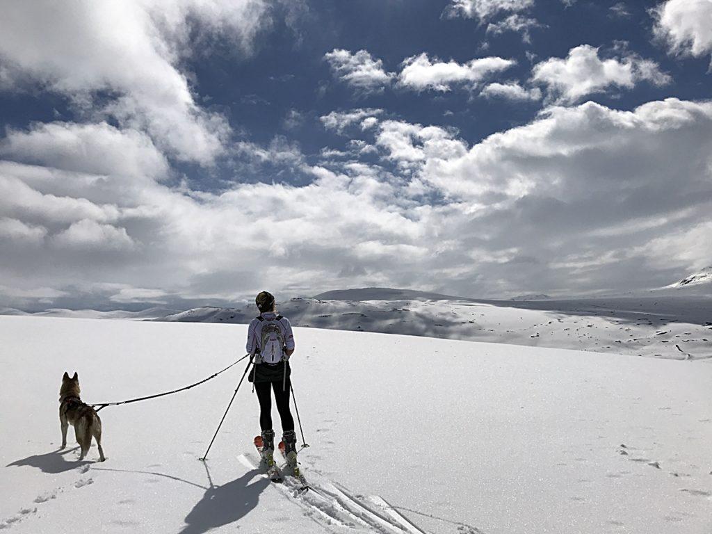 Hund - Eier - Randonee-tur - Vinter - Agri Dyreforsikring