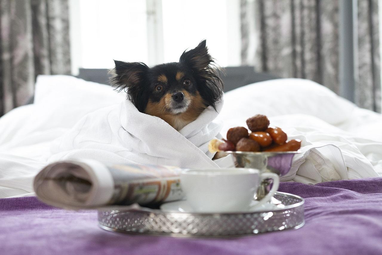 Hundevennlige hoteller - Best Western