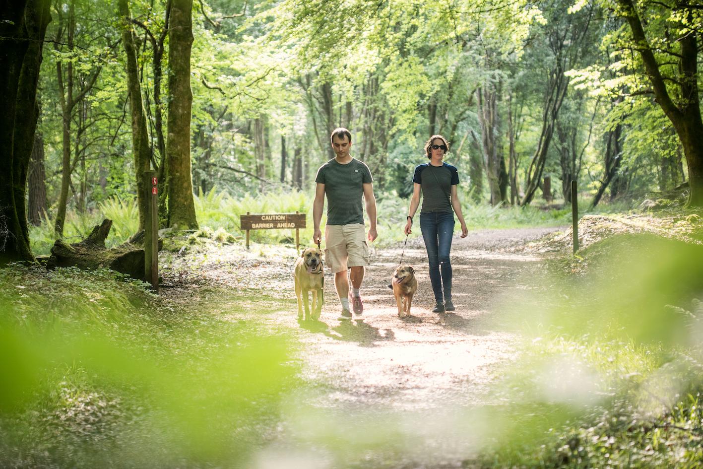 Hundevennlige Irland - Fra Portumna Forest Park